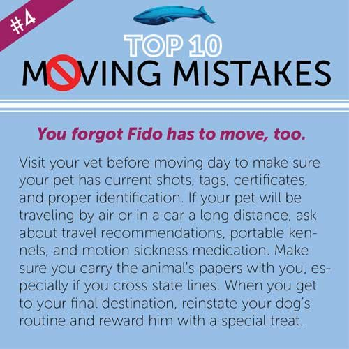 Top 10 Moving Mistakes explained by Blue Whale Moving Company