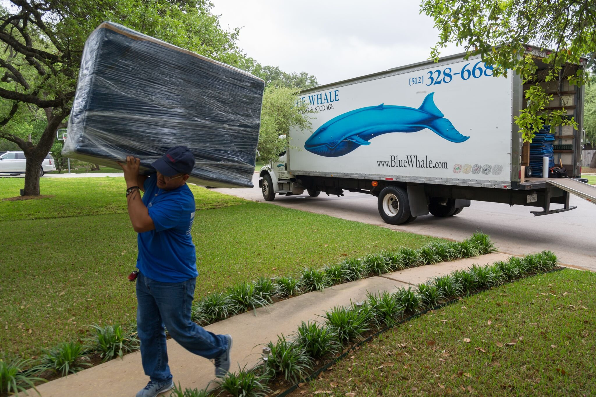 blue whale mover and truck