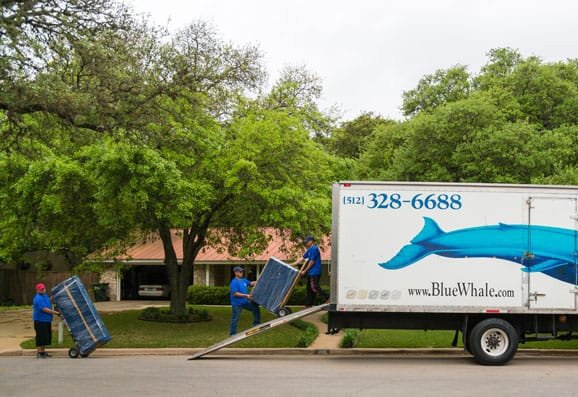 blue whale movers in leander